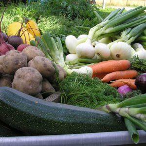 Sundös frilandsgrönsaker