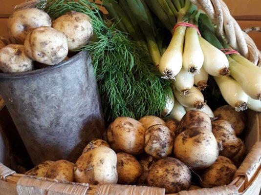 Sundö potatis och lök